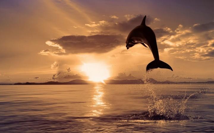 На берегу курортного города в Запорожской области обнаружили дельфина (ФОТО)