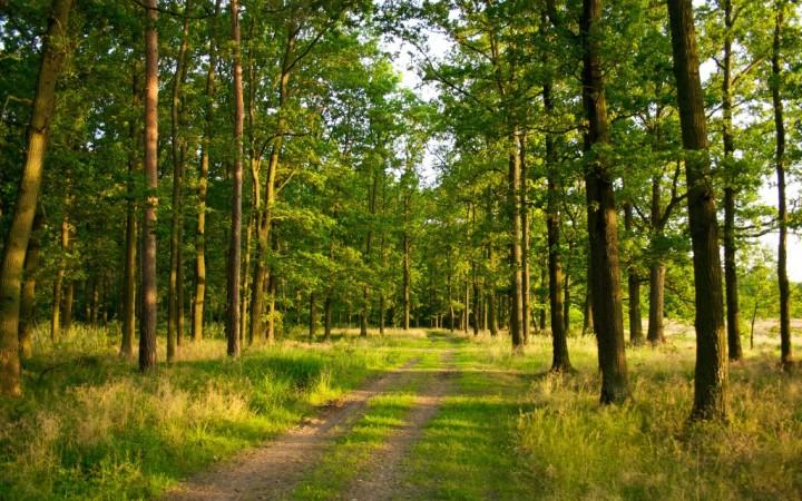 лес 129