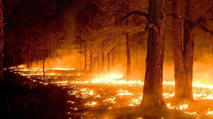В Запорожской области огонь повредил более 3 га экосистем