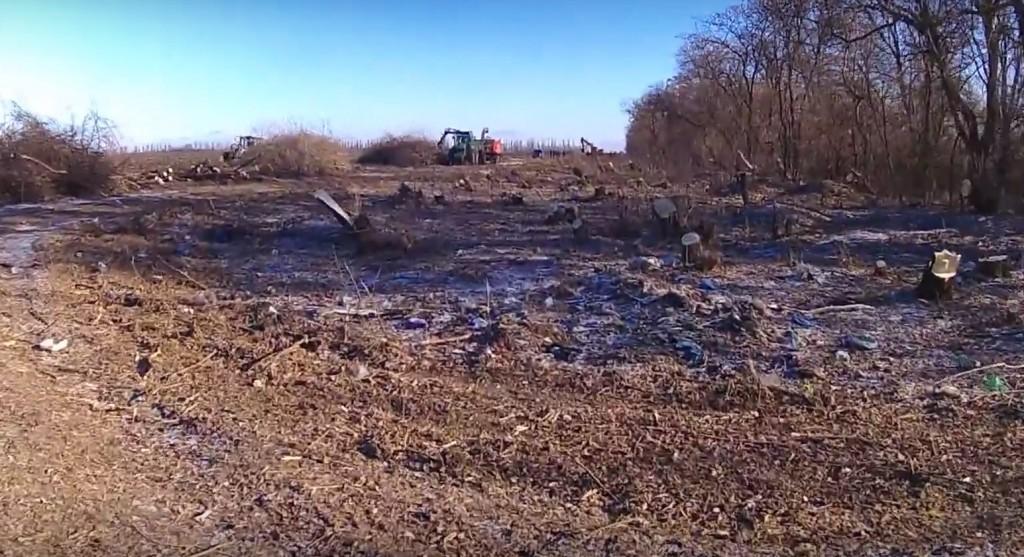 В Запорожской области лесополосы вырубаются и продаются километрами (ВИДЕО)