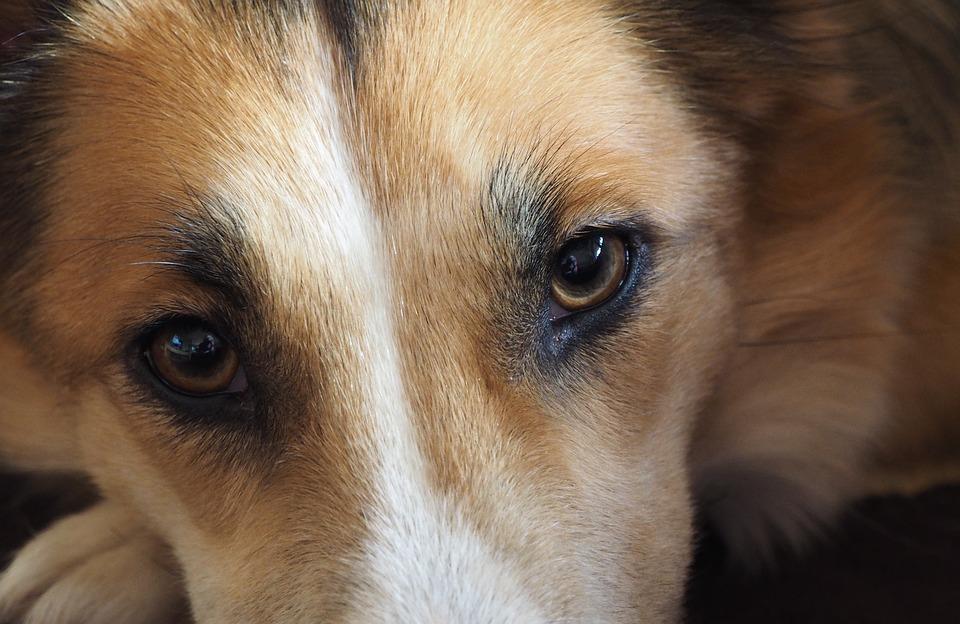 В Запорожье живодер жестоко убил собаку и скрылся