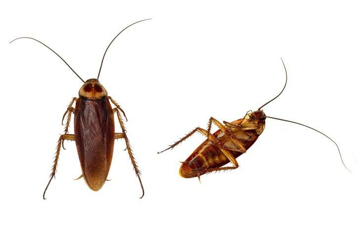 По соседству с грудничками: в Запорожье тараканы оккупировали детскую больницу № 5 (ФОТО, ВИДЕО)