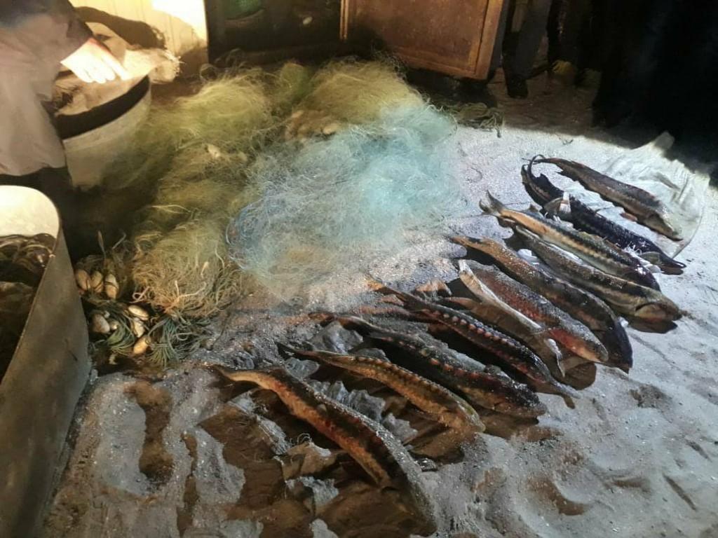 В Запорожской области задержаны браконьеры, выловившие краснокнижной рыбы почти на полмиллиона гривен (ФОТО)