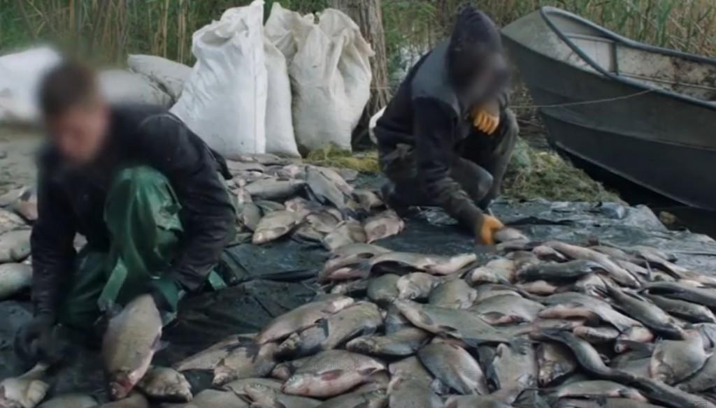 В Запорожской области СБУ накрыла крупную группу браконьеров: обнаружено 22 тонны нерестовой рыбы (ФОТО, ВИДЕО)