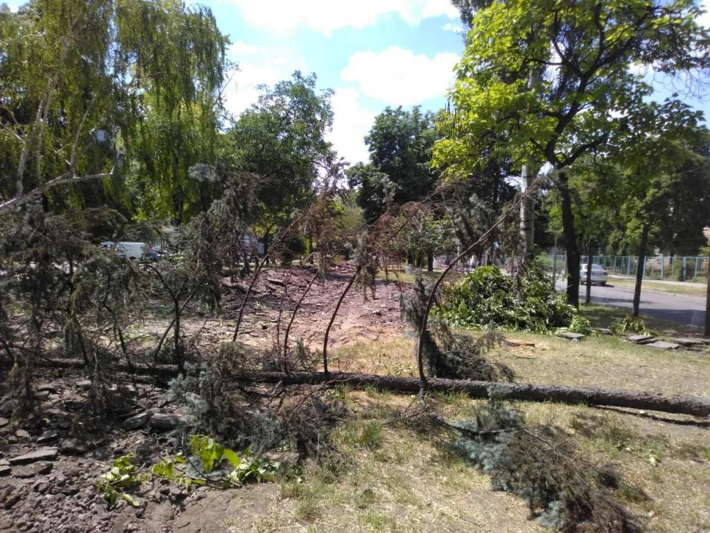 В центре Запорожья началась вырубка многолетних деревьев: активисты спят (ФОТО, ВИДЕО)