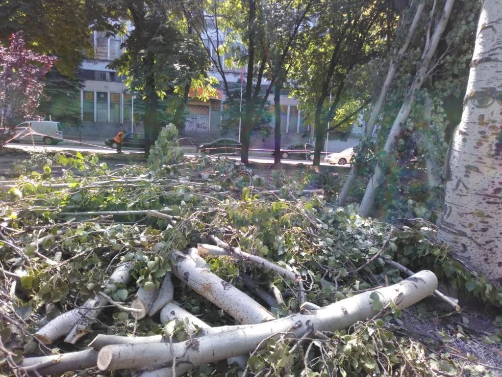 В Запорожье на пр. Маяковского завершается вырубка деревьев: сколько уже спилено (ФОТО, ВИДЕО)