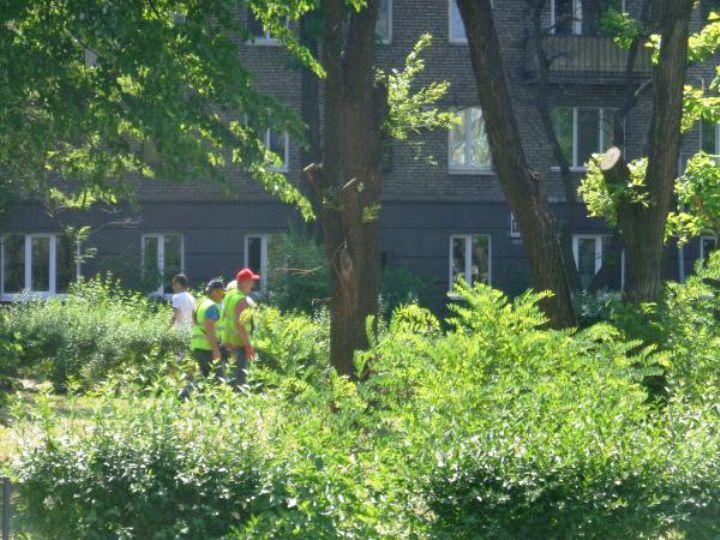В Запорожье, несмотря на возмущение активистов, обустраивают сквер Яланского (ФОТО)