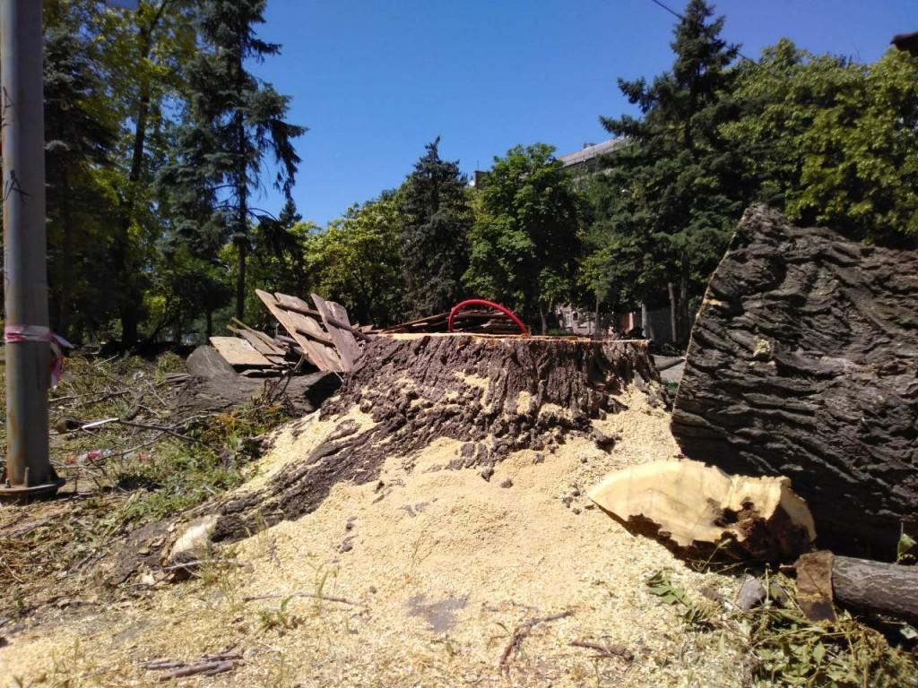Как выглядит проспект Маяковского после вырубки деревьев (ФОТО, ВИДЕО)