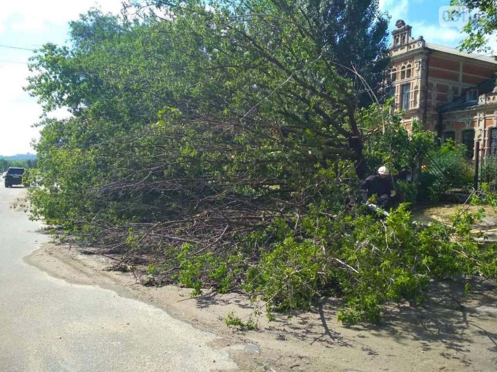 Непогода в Запорожье наделала много бед: поваленные деревья, обесточенная больница (ФОТО)