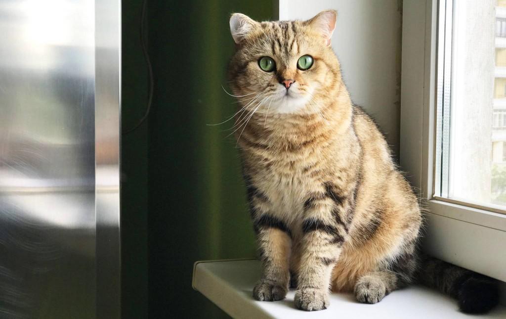 В Мелитополе пожарные спасли испуганного котика из горящей квартиры