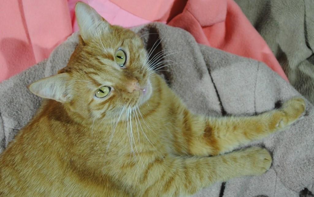 В Запорожье кот выпал с 3-го этажа и пропал: хозяева просят о помощи (ФОТО)