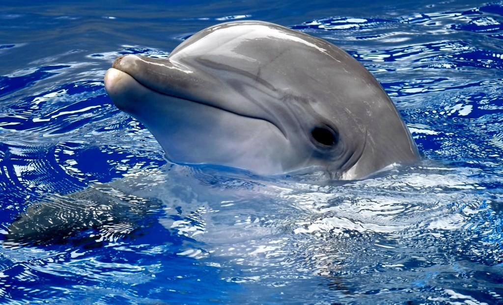 На запорожском курорте засняли дельфинов в нескольких метрах от берега (ВИДЕО)