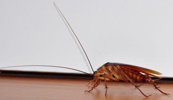 Сотни тараканов в палате: в запорожской больнице нашествие неприятных насекомых (ВИДЕО)