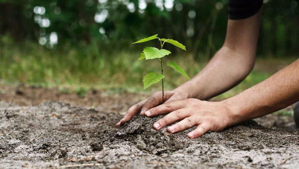 Последствия вырубки деревьев в сквере Яланского: запорожцы запустили экологическую акцию