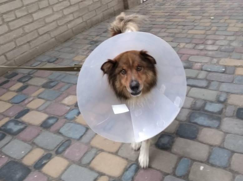 В Запорожье собака, испугавшись грозы, прыгнула с балкона (ФОТО)