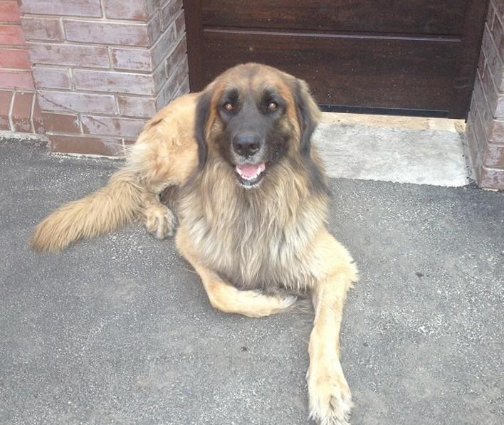 В Запорожье ищут новых хозяев псу, который остался «сиротой» (ФОТО)