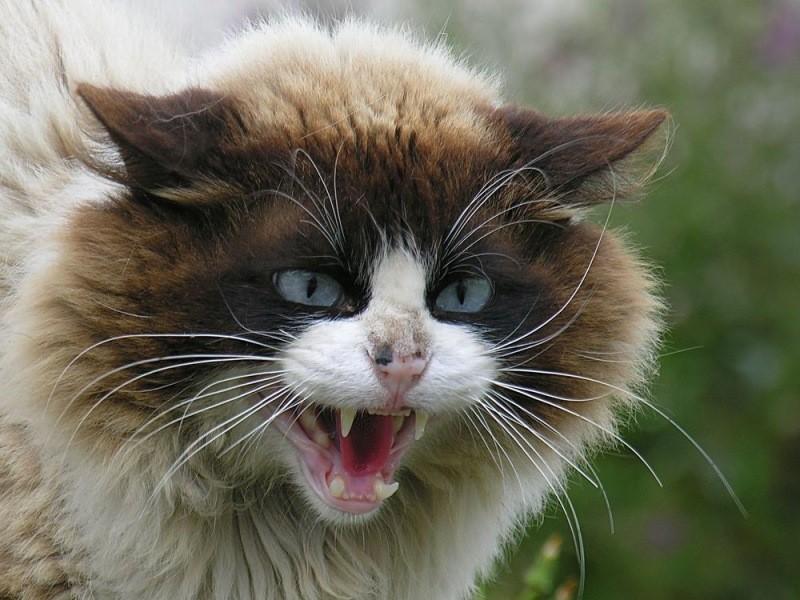 В Запорожской области на женщину напал кот: пострадавшей назначили профилактику от бешенства