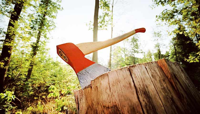 В Запорожье из-за незаконной вырубки деревьев остановили строительство многоквартирного дома (ВИДЕО)