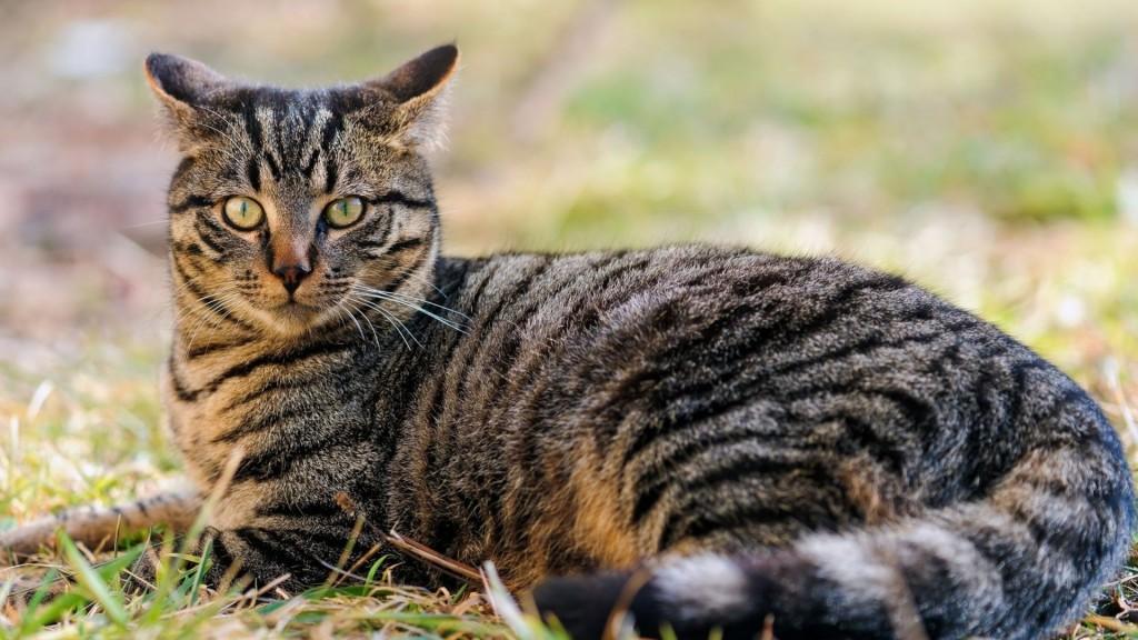 Чудесное спасение: в Запорожье из ливневки вытащили застрявшего там кота (ВИДЕО)