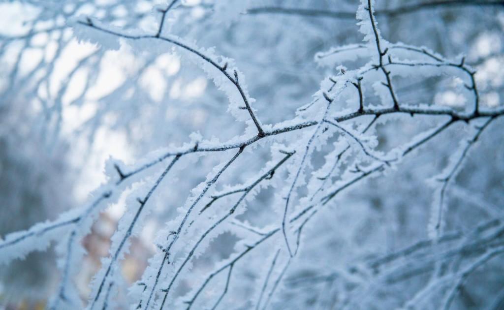Зима уже здесь: в Запорожской области выпал снег (ФОТО, ВИДЕО)