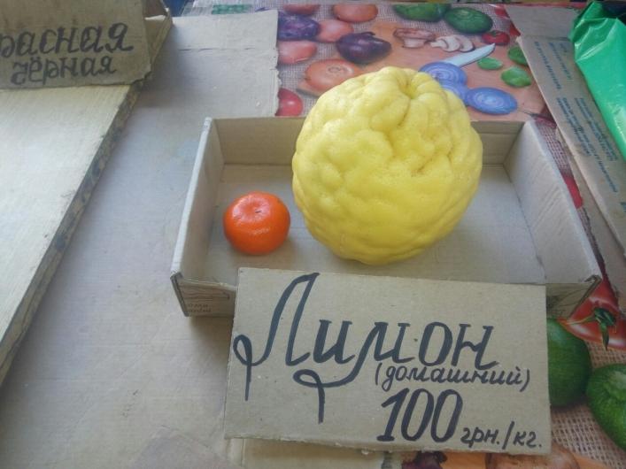 В Мелитополе вырастили гигантский лимон (ФОТО)