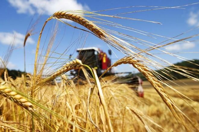 Запорожские фискалы рассказали об успехах детенизации агросектора