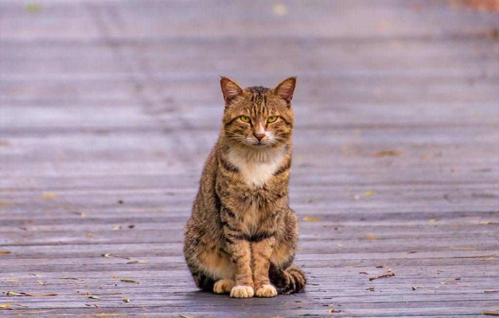 В Запорожье предлагают признать котов частью экосистемы города