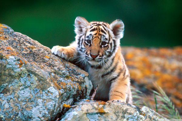 В Васильевском зооценре больше нельзя будет фотографироваться с детенышами животных