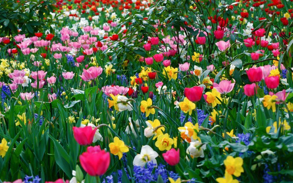 Распустившаяся ветка дерева и ирис: в Мелитополь уверенно идет весна (ФОТО)
