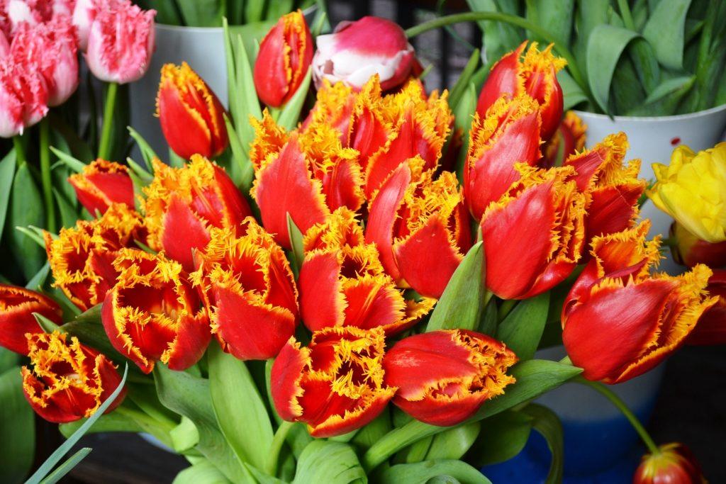Цветочный бум: сколько запорожцам придется отдать за букет (ФОТО)