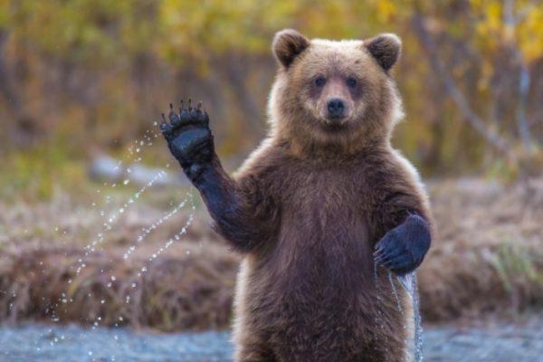 В Васильевском зооцентре сняли милое видео с играющим медведем (ВИДЕО)