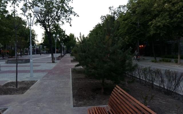 В Запорожье в центре города две женщины выкопали куст можжевельника (ВИДЕО)