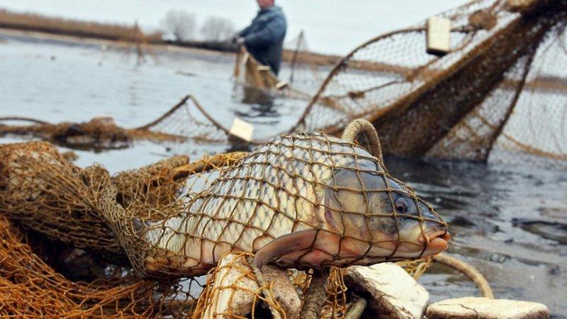 «Кукольный театр»: запорожский активист рассказал, как рыбпатруль «обилечивает» браконьеров (ВИДЕО)