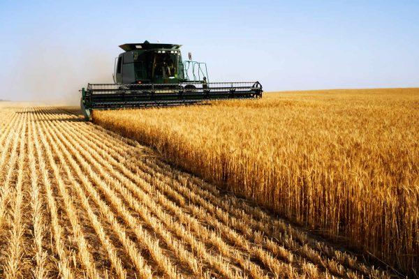 В Запорожской области продолжается падение в сельхозотрасли