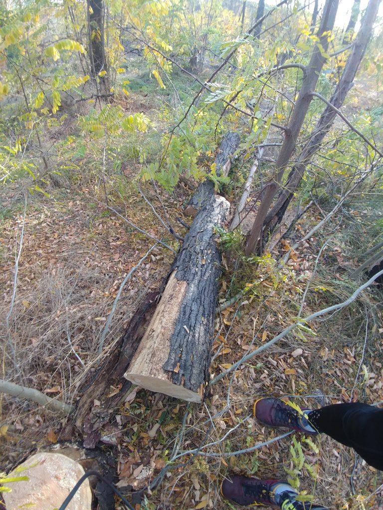 что будет если срубить дерево в лесу