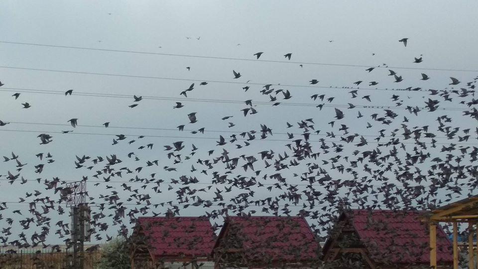 В курортном городе Запорожской области жителей напугало нашествие птиц (ФОТО)
