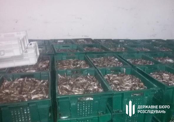 Следователи в Запорожской области продавали рыбу, изъятую при незаконных обысках, — ГБР (ФОТО)