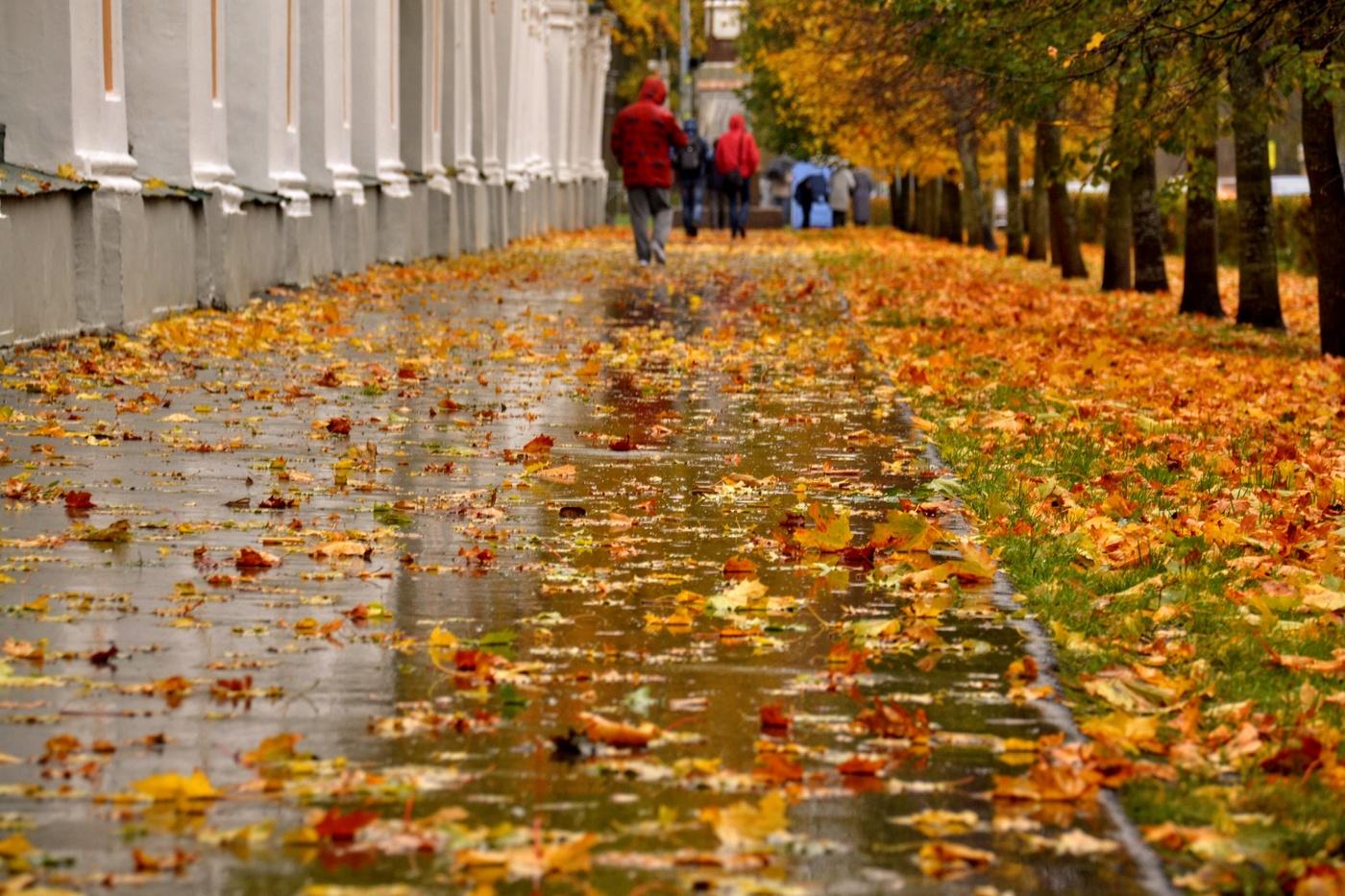 Заморозки, снег с дождем, ливни и шквалы: какой будет осень-2020 в Украине  | Портал Акцент