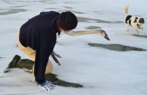 Тузик с хозяином спасли раненого лебедя в Запорожской области: «операцию» снимали на ВИДЕО