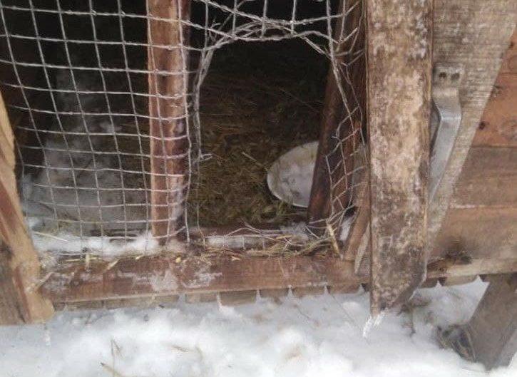 «Чупакабра» вернулся: в сети показали мертвых животных под Запорожьем (ФОТО)