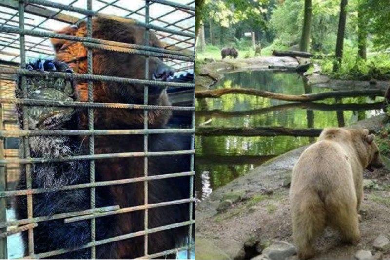 Как выглядит место в Нидерландах, куда привезут медведей из ДЖД Запорожья (ФОТО, ВИДЕО)