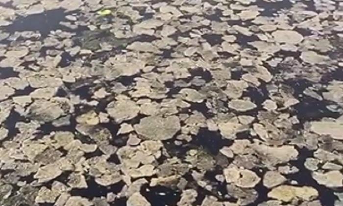 Под Запорожьем экологическая катастрофа на реке усугубилась (ВИДЕО)
