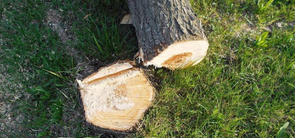 В Запорожье штраф за два незаконно спиленных дерева оплатили спустя 3,5 года