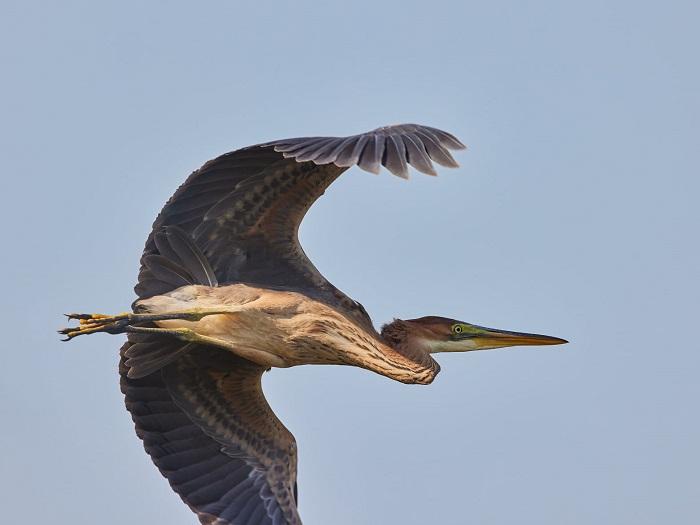 Природа удивляет: в Запорожской области запечатлели необычную птицу (ФОТО)
