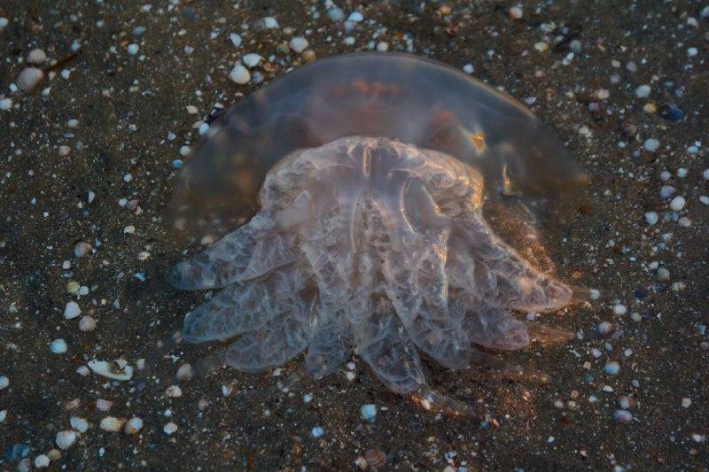 Мэр Бердянска рассказал, как себя вести с медузами (ВИДЕО)