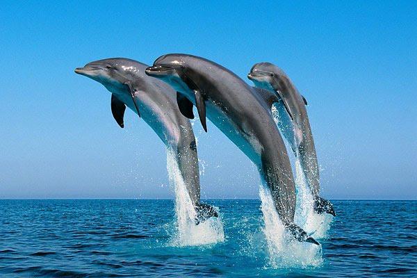 Жителю Бердянска дельфины испортили рыбалку (ВИДЕО)