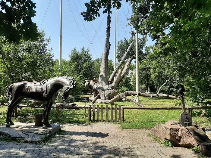 Как выглядит 700-летний Запорожский Дуб сегодня (ФОТОРЕПОРТАЖ)