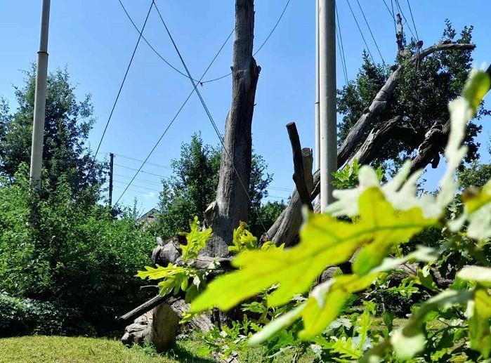 Как выглядел Запорожский дуб полвека назад (ФОТО)