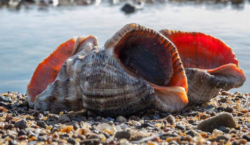 В Азовском море размножается хищник, который в 100 раз опаснее медузы, – ученые