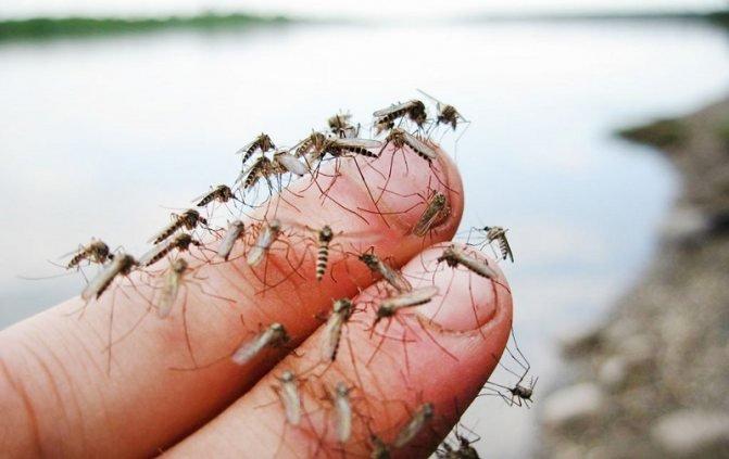 «Это полный абсурд!»: мэр Бердянска выступил против уничтожения комаров